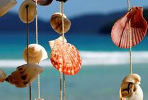seashells - coquillages