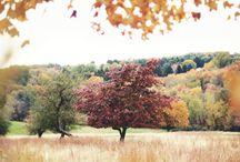Autumnal Posts