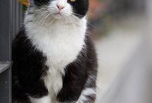 European Cats