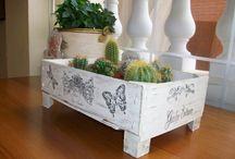 plantering & cactus