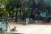 Mexico city for the kids and the pets / Mexico City is a pet friendly city and also has amazing attractions for kids.