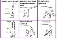Miow Miau