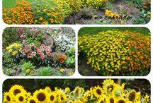 Zahrada, květiny / Květiny