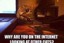 kitty meems
