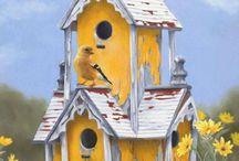 Birds  / My backyard birds / by Kim Rowlett