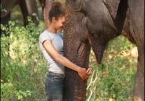 My Love for Elephants ♥