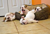 Doggie Hangover / We've all had one.