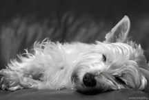 A Dogs Life / by Morganne Brown