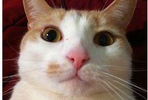 Selfi cat