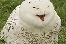 Owls <3 / My favourite animals... except for cats ofcourse!