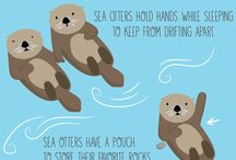 otters and urchins