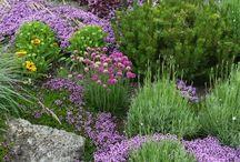 Bylinky na zahradě / Bylinková zahrada je krásná i funkční