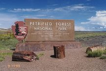 Petrified Forest National Park / Arizona / The Arizona Petrified Forest National Park is located in the northeastern part of Arizona about 25 miles east of Holbrook, Arizona. It is a fascinating place to visit abundant with geographical history. The Painted Desert is adjacent to the Petrified Forest, so it is a great opportunity to visit both historical sites in a single trip.