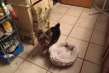 My fur babies / Dogs