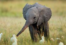 Cute animals:)