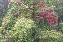 Fall foliage / by Berkeley Heights Public Library