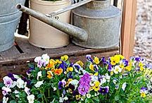 I love Spring! / by Kim Hodges