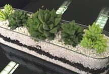 Succulents love them