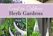 Herbal gardens / Ideas of herbal gardens, herbal plants for indoor and outdoor