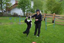Hundetrainingsplatz / Das Hundehotel Sonja verfügt direkt am Haus über einen großen Hundetrainingsplatz. Ihr Liebling kann dort spielen, herumtollen oder ist beim Dogsitting auf diesem Platz wunderbar aufgehoben.