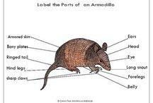 Label : printables on Greentreemontessorimaterials.com