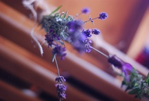 Herbalism / by katie ferrari