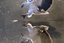 birdies / birdies