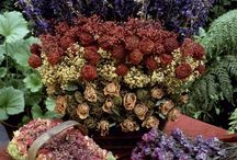 Sušené kvety a aranžmá