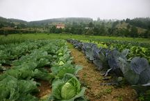 agricultura ecològica / menjar que no utilitzen productes químics