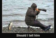 Funny Sh....Stuff :) / by Heather Cassity