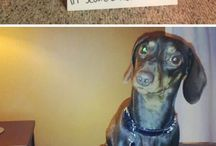 Funny dog shaming! / Some of these are actually kind of hilarious!