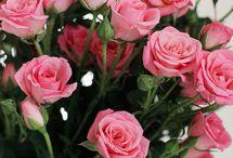 Spring...pink