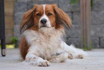 kooiker / Kooiker honden