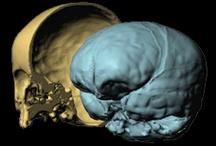 neuro-anthropology