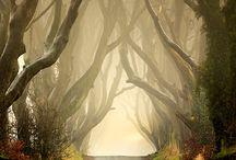 Fog / by Leslie Monden