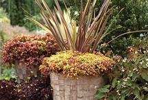 Plants ❀¸.•*´¯`❀❀❀