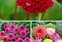 Virágok/ Flowers