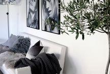 Indoor Plants | dD