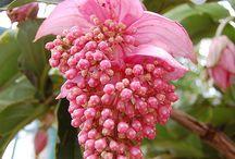 Flowers - Květy