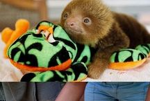 Sloths / Sloths may be slow but their funny and cute