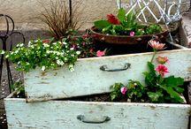 jardin / cultiver dans des tiroirs