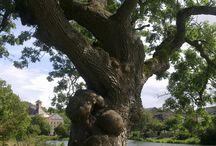 Árvores / .......<3.......