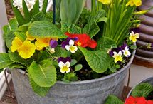 Λουλουδια-γλαστρες