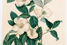 vintage botanical Prints tattoo ideas
