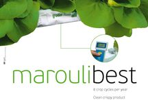 Hydroponic MarouliBest© Solution
