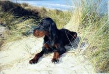 The life is better with a gordon setter