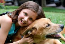 ¿Tus hijos quieren una mascota? Conoce las mejores opciones para tu familia