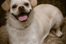 Greater Charlotte SPCA Foster Dogs / Dogs available for Adoption from The Greater Charlotte SPCA