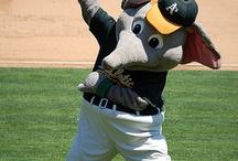 Bay Area Baseball