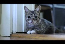 lil BUB / by Kim Carter